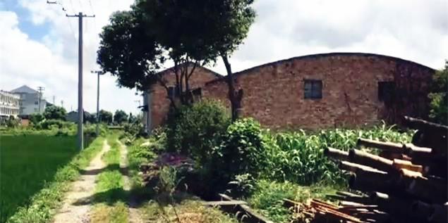 路桥蓬西村农田上的违建厂房,为何迟迟未拆?