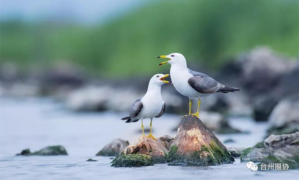 """看台州丨野鸟集体来""""刷脸"""""""