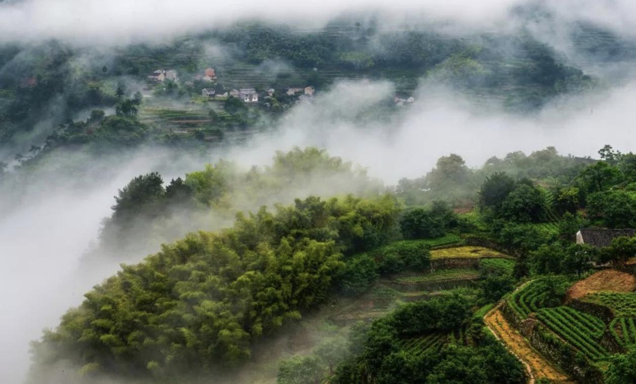 台州唯一!国际茶叶博览会,天台这款茶拿下金奖