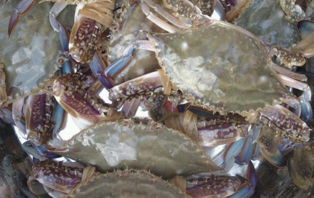 記者調查丨東海這種蟹被禁,臺州菜場還有在賣嗎?