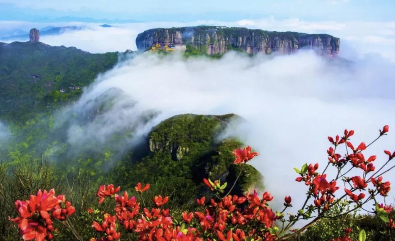 臺州這4片山頭即將被杜鵑花染紅,準備出發!