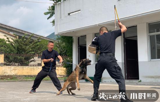 搜救犬小虎執行任務后犧牲,臨海市民送錦旗:震動天地!