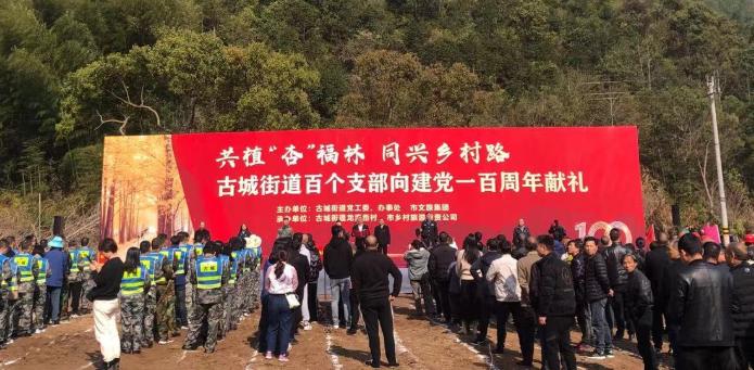 """临海古城街道:百个支部共植""""杏""""福林,美丽环境铺就经济路"""